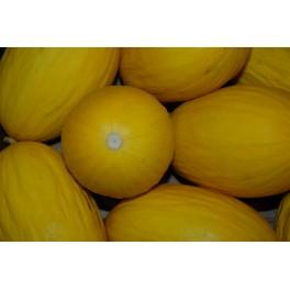 Melon Canari