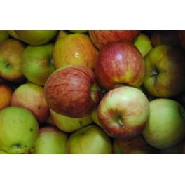 Fondant aux pommes
