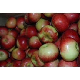 Grimole aux pommes