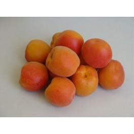 Abricot à confiture